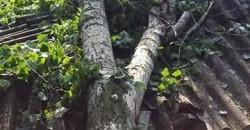 Trivalea Mosteni – interventie SVSU – degajare arbore
